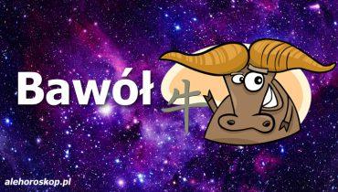 chiński znak zodiaku bawół