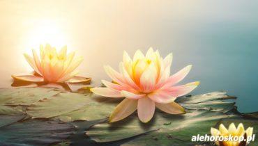 horoskop kwiatowy lotos