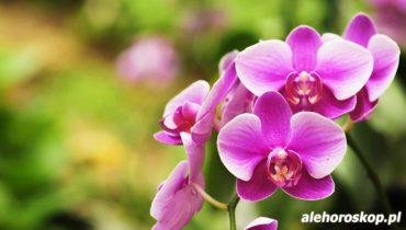 horoskop kwiatowy orchidea